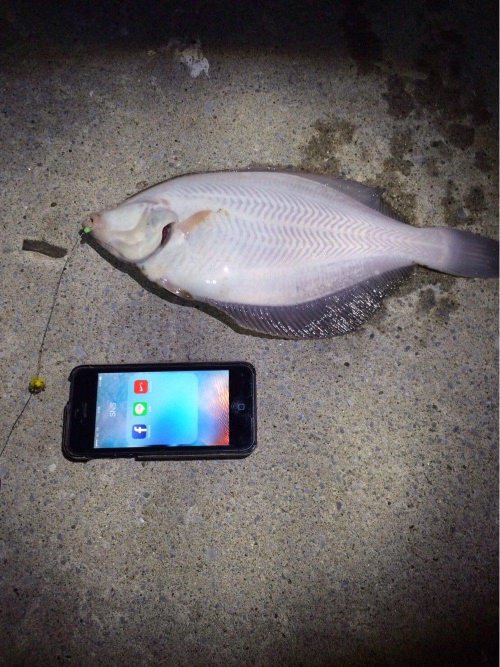 りゅうさんさんの投稿画像,写っている魚はカレイ