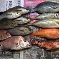 イナバーさんの静岡県沼津市でのアジの釣果写真
