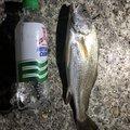 ぼーずさんの茨城県那珂郡での釣果写真