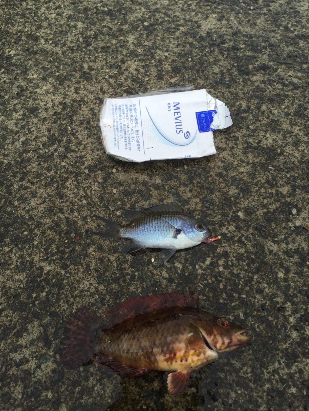 ジョーさんの投稿画像,写っている魚はメジナ