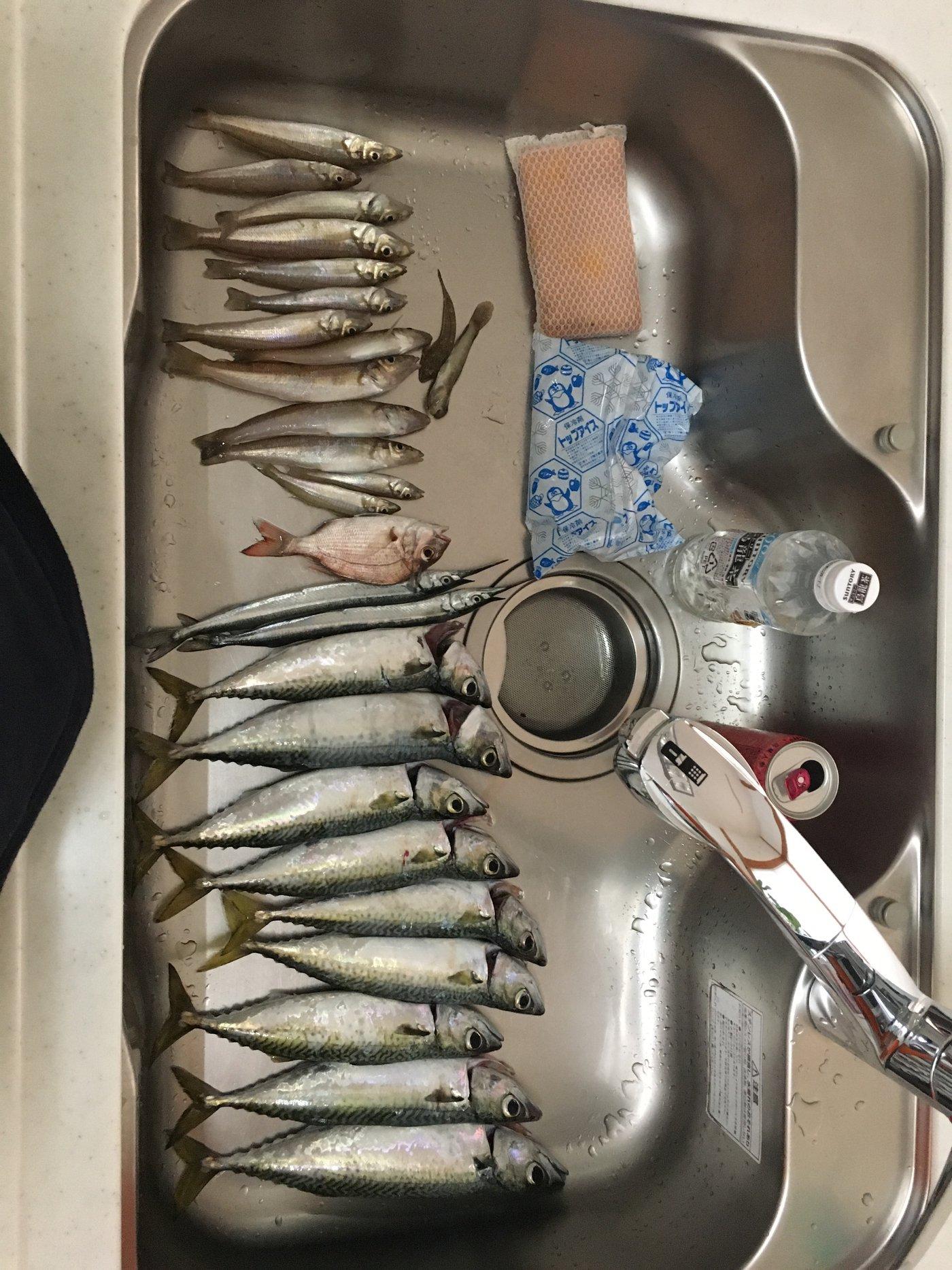 ONZさんの投稿画像,写っている魚はマサバ,サヨリ,シロギス
