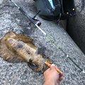 やーーたくさんさんの長崎県諫早市での釣果写真