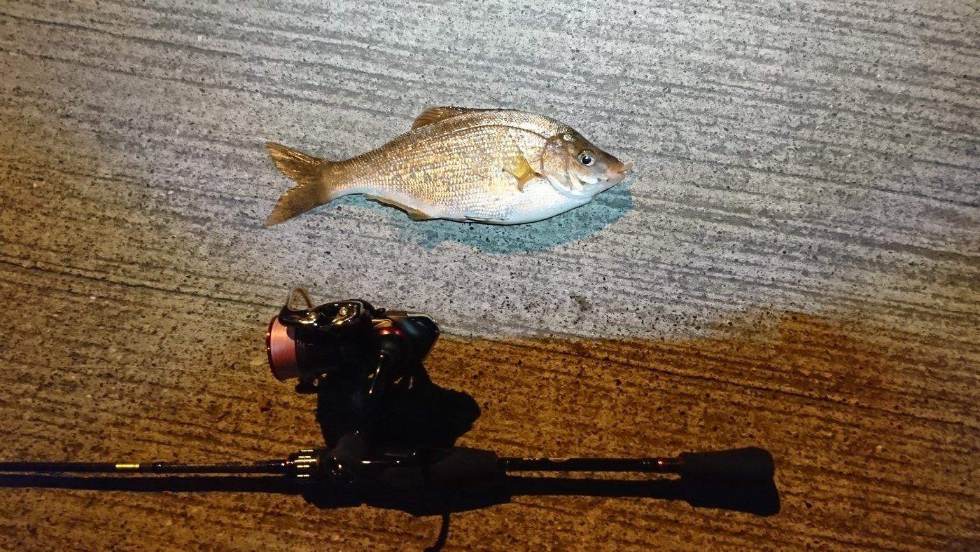 田村ゆかりさんの投稿画像,写っている魚は