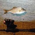田村ゆかりさんの岩手県紫波郡での釣果写真