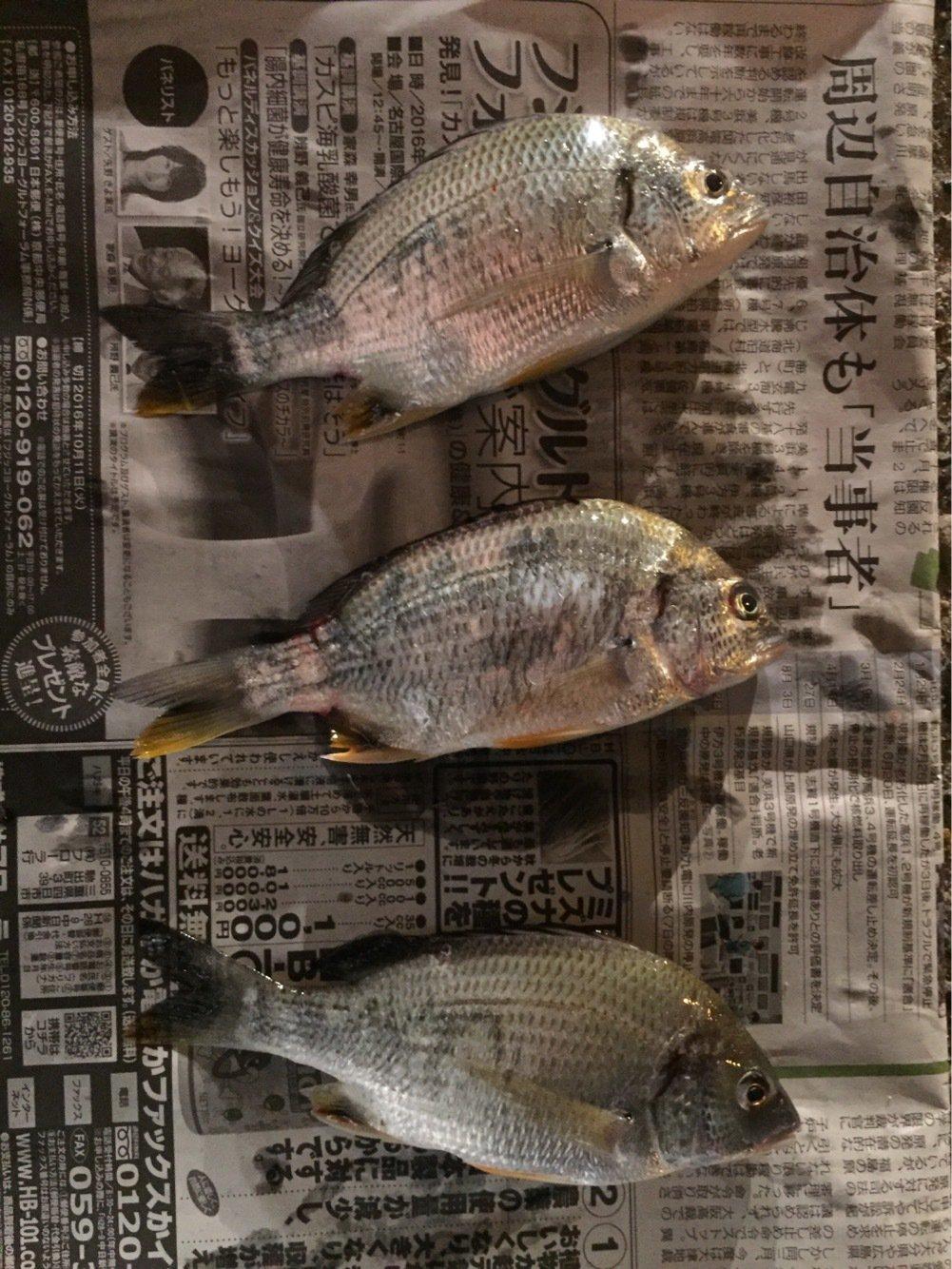 SHOーKUNさんの投稿画像,写っている魚はキチヌ