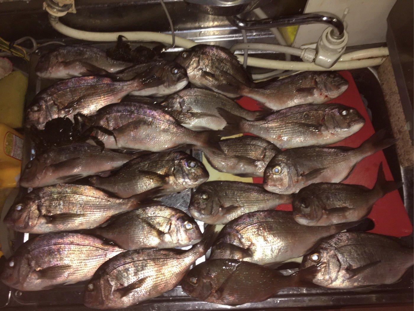 レイク コパさんの投稿画像,写っている魚は