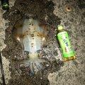 壊れかけのレディ男さんの高知県土佐市での釣果写真