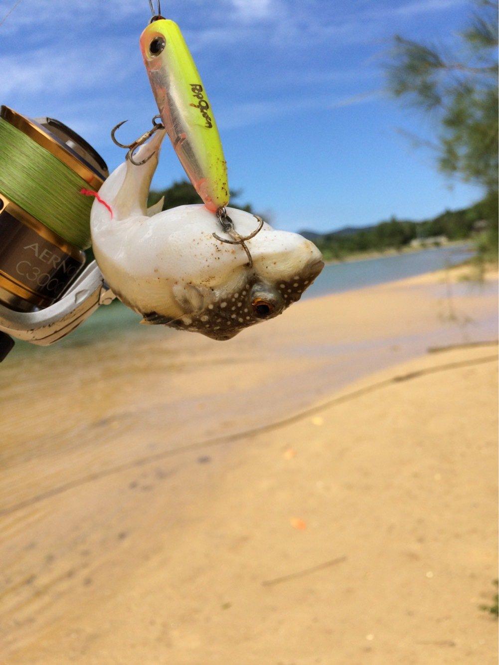 yamachaaanさんの投稿画像,写っている魚はクサフグ