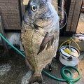 39さんの秋田県能代市での釣果写真