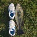 ハルはるさんの大分県別府市での釣果写真