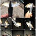 ムーさんの神奈川県横須賀市でのカサゴの釣果写真