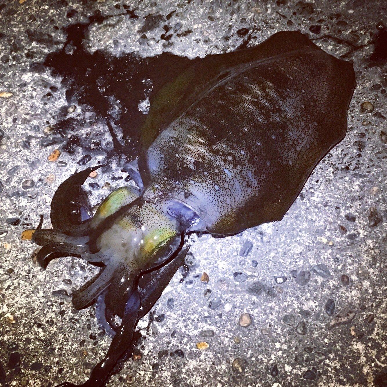 なおなおさんの投稿画像,写っている魚はアオリイカ