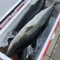 イーグルさんの石川県珠洲市での釣果写真