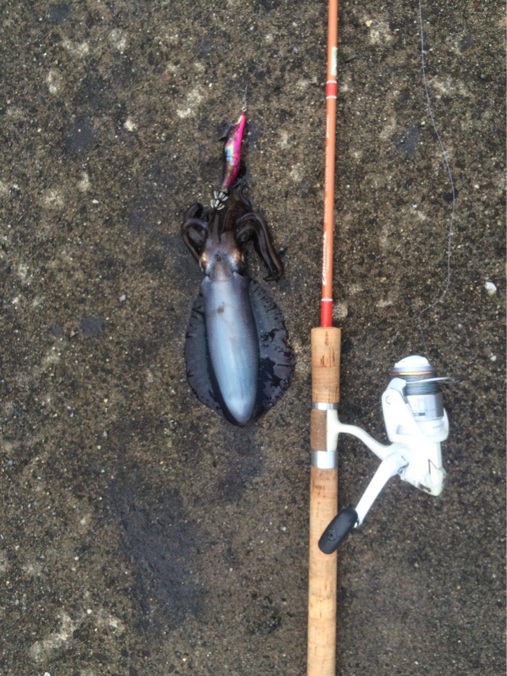 nさんの投稿画像,写っている魚はアオリイカ