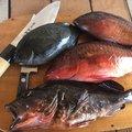 ぎゃん!!さんの和歌山県東牟婁郡での釣果写真