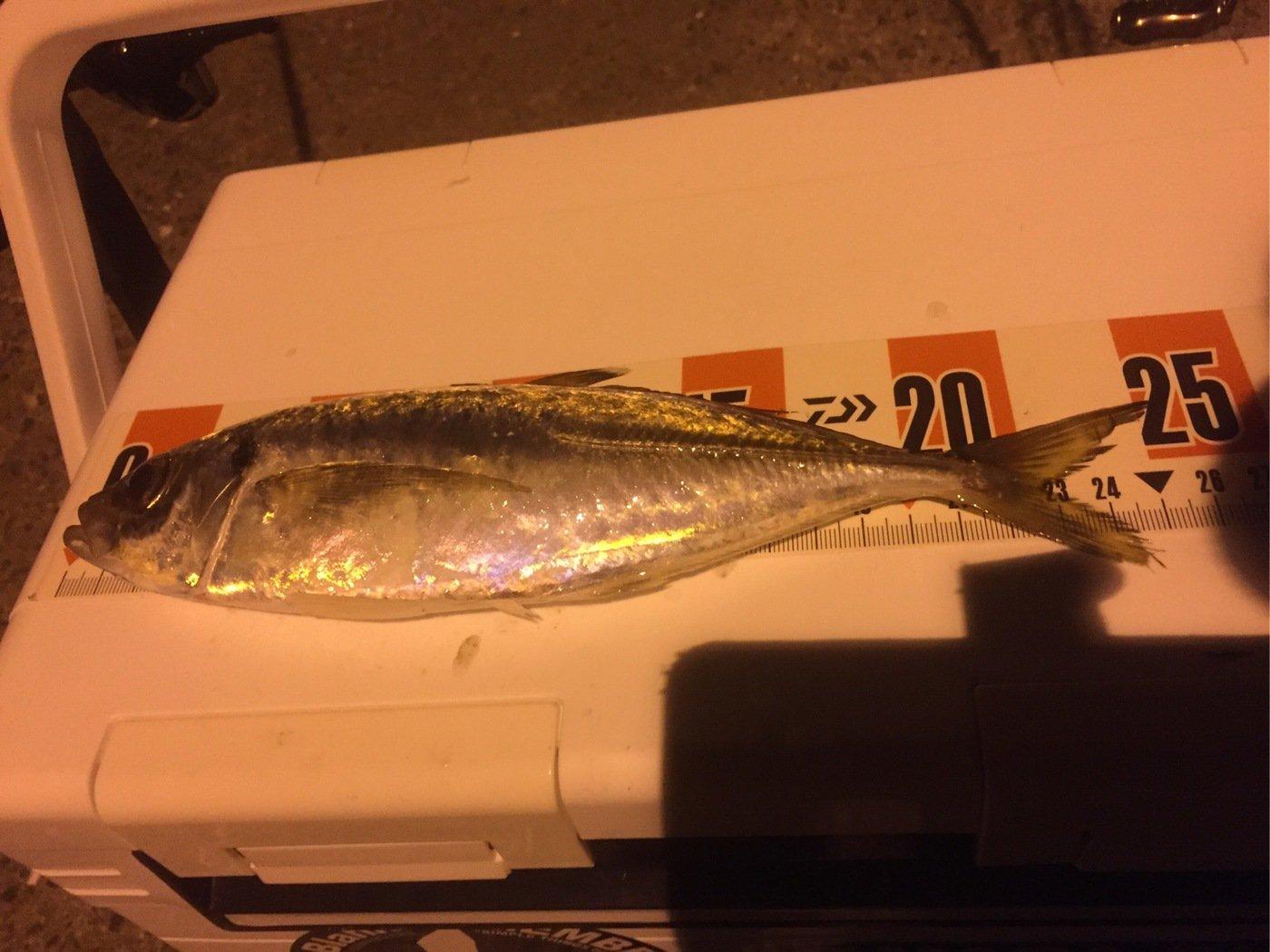 Ryutoさんの投稿画像,写っている魚はアジ