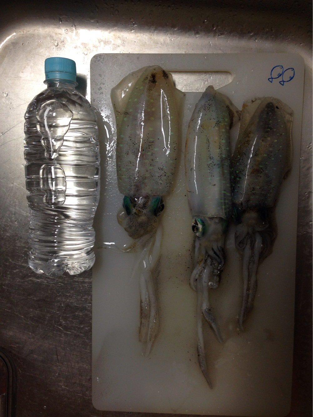 肉腕アトムさんの投稿画像,写っている魚はアオリイカ