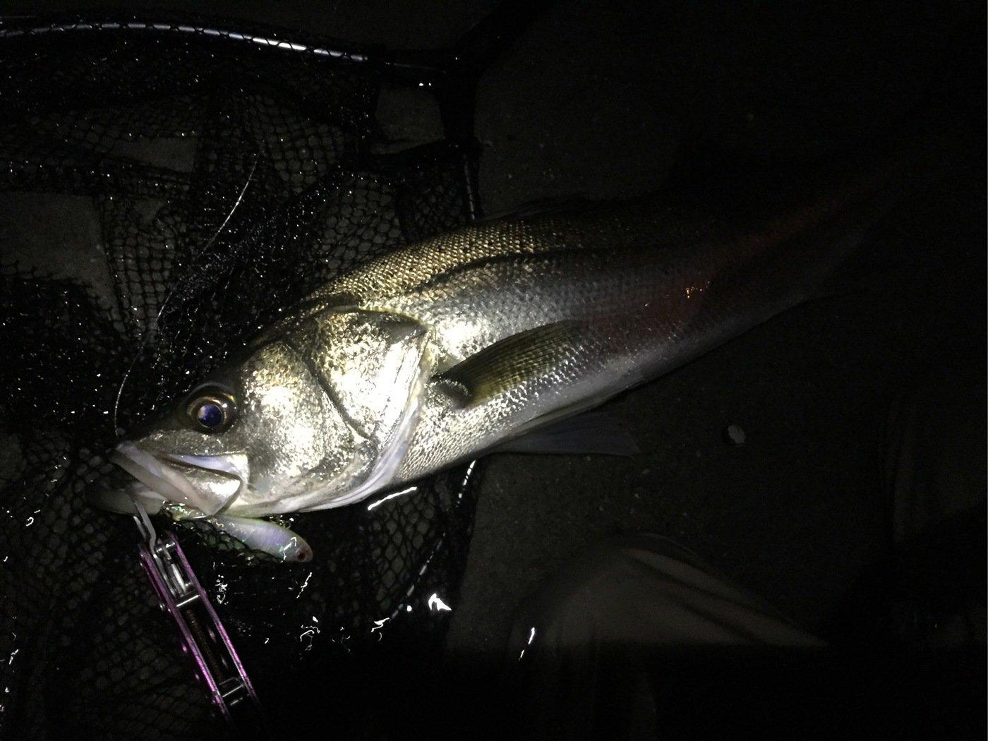 Benさんの投稿画像,写っている魚はスズキ