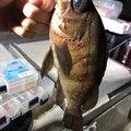 草リグさんの千葉県市原市での釣果写真