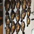 まーくんさんの兵庫県でのメバルの釣果写真
