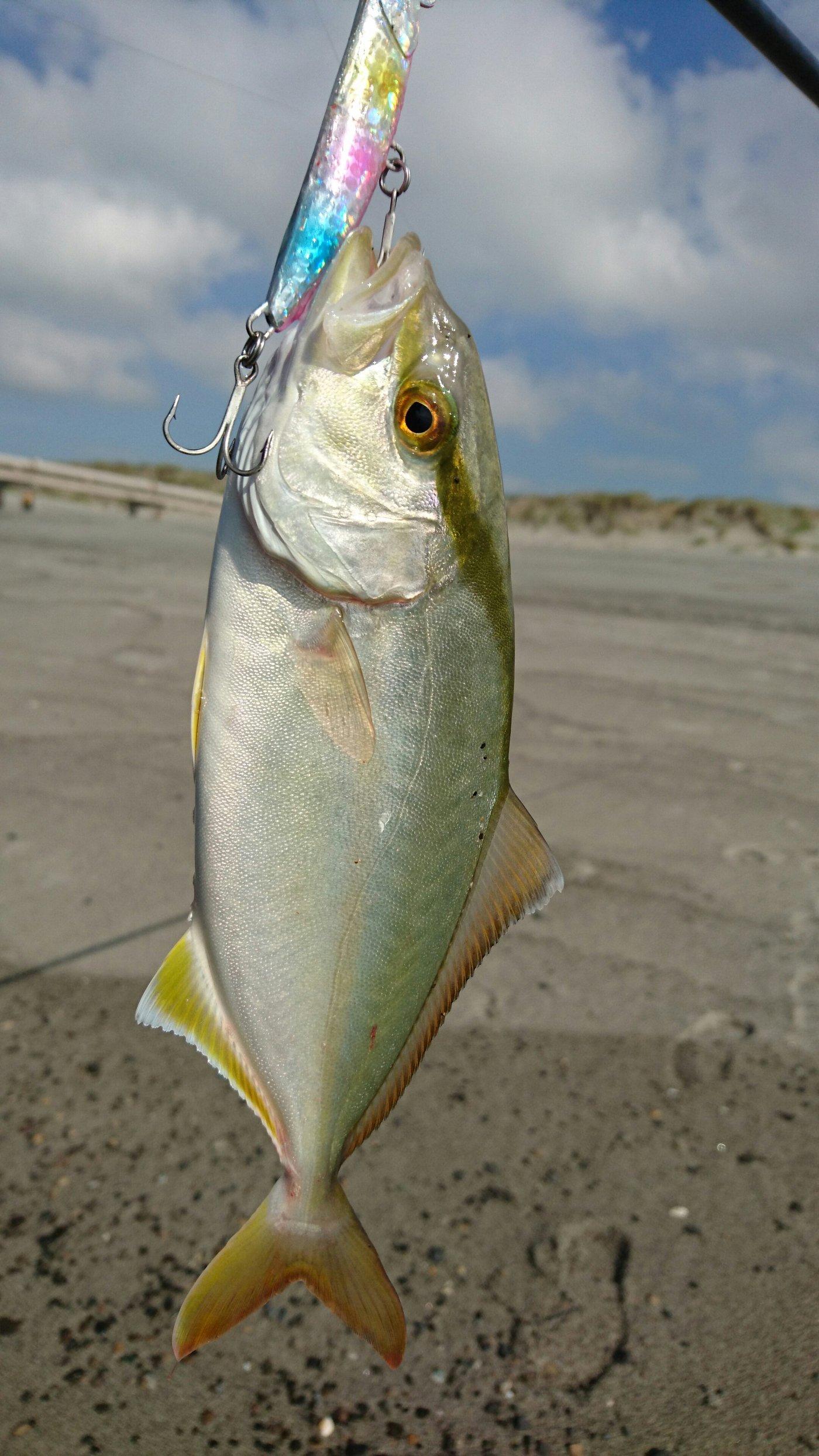 masa_KINGさんの投稿画像,写っている魚はカンパチ