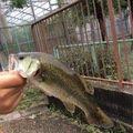 アイナメさんの愛知県尾張旭市での釣果写真