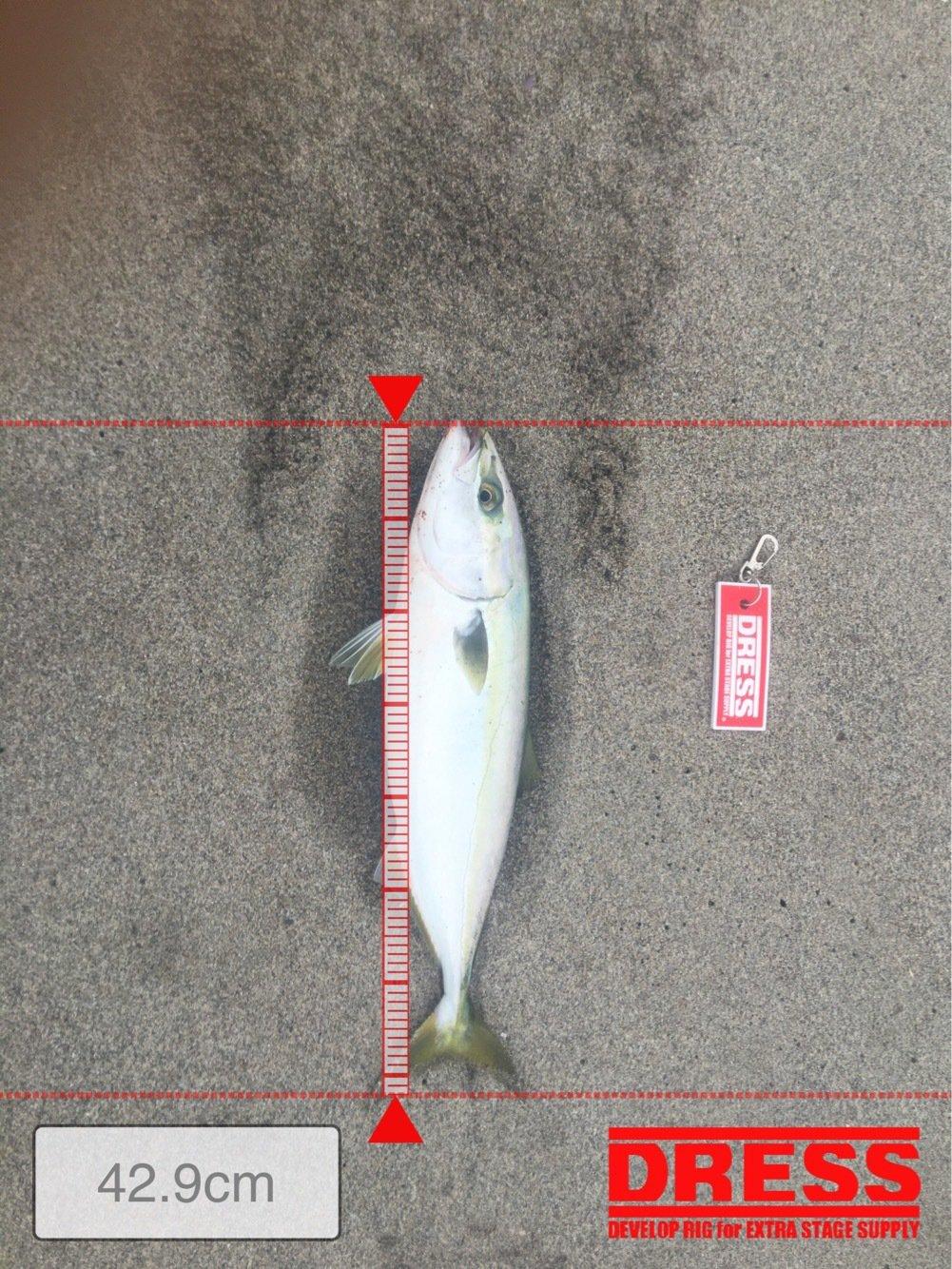 パスタさんの投稿画像,写っている魚は