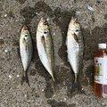 釣りキチみずき🐳🐠🐡🐙🐟🐬さんの熊本県菊池市での釣果写真