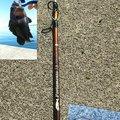 かなぼうさんの北海道でのキツネメバルの釣果写真