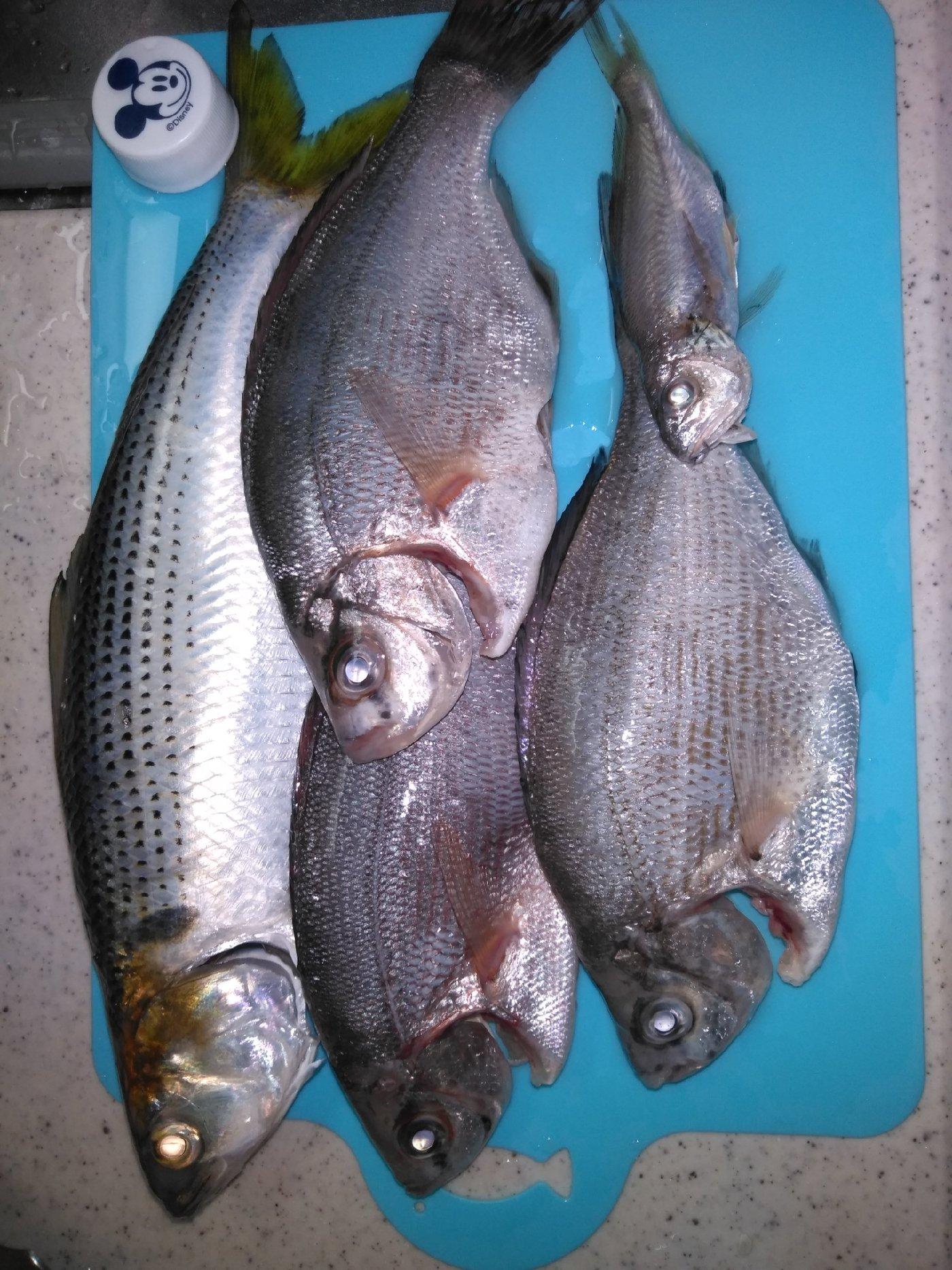 hayato さんの投稿画像,写っている魚は