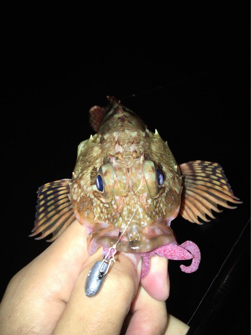 ノックさんの投稿画像,写っている魚はカサゴ