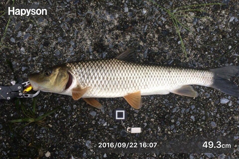 ヒデキさんの投稿画像,写っている魚はコイ