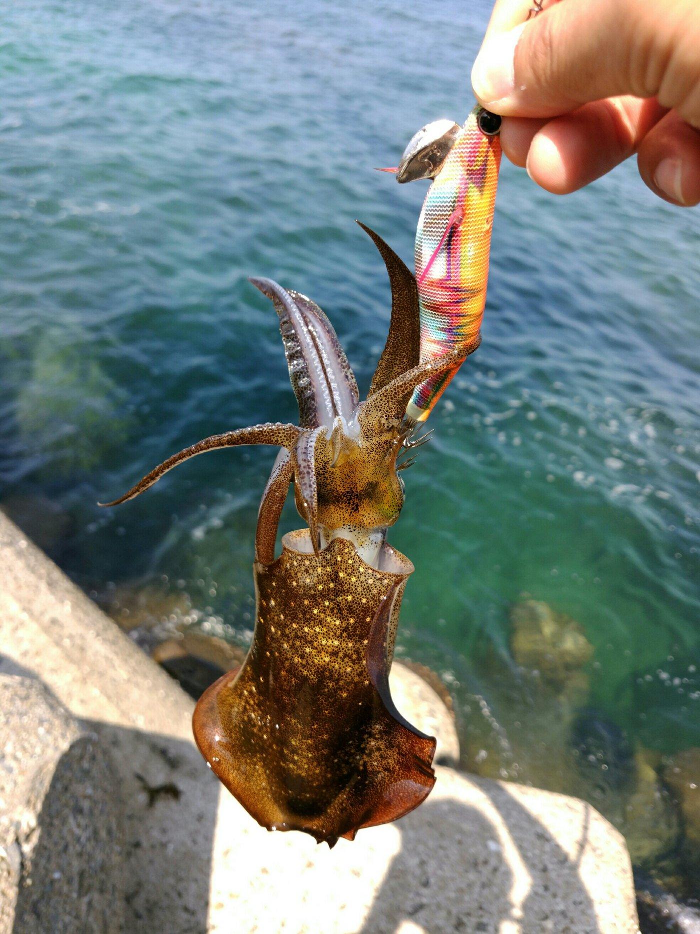 まさきさんの投稿画像,写っている魚はアオリイカ