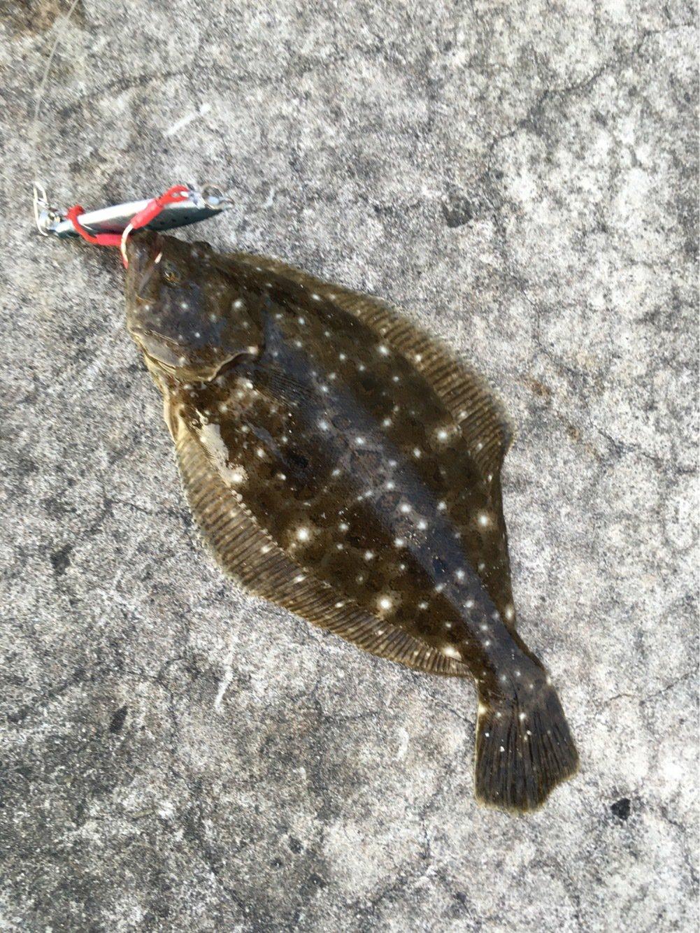 とくさんの投稿画像,写っている魚はヒラメ