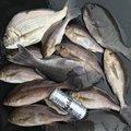 英信さんの宮崎県串間市での釣果写真