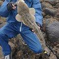小恋さんの鹿児島県阿久根市での釣果写真