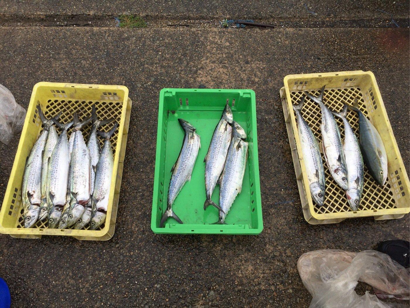 tunaさんの投稿画像,写っている魚はサワラ