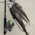 釣り好きおじさんさんの宮城県岩沼市での釣果写真