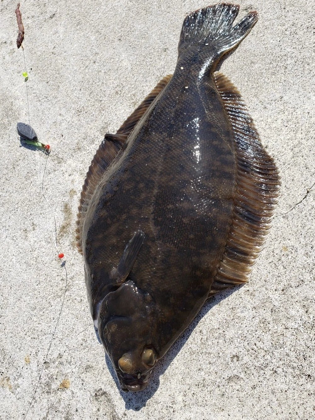 ゆこひろさんの投稿画像,写っている魚は