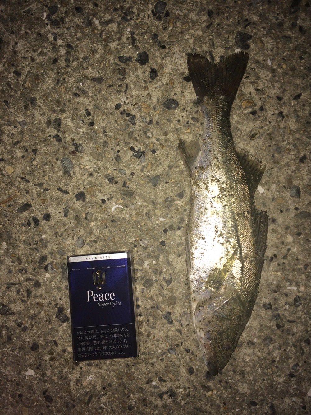 buryunntoさんの投稿画像,写っている魚はスズキ