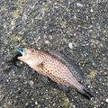 yu-ki69さんの和歌山県東牟婁郡での釣果写真