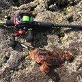 よしさんの静岡県熱海市での釣果写真