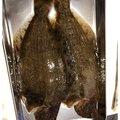 ゲゲゲのさんの茨城県ひたちなか市での釣果写真
