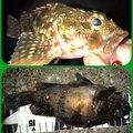 ヨッシーさんの三重県鳥羽市での釣果写真