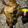 穴吹あきひろさんの香川県坂出市でのカサゴの釣果写真