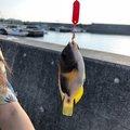 さknさんの沖縄県宜野湾市での釣果写真