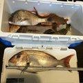 桃次郎さんの山形県天童市での釣果写真