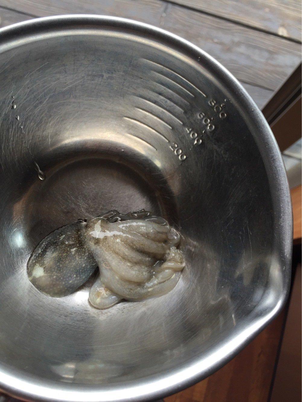 れんさんの投稿画像,写っている魚はイイダコ