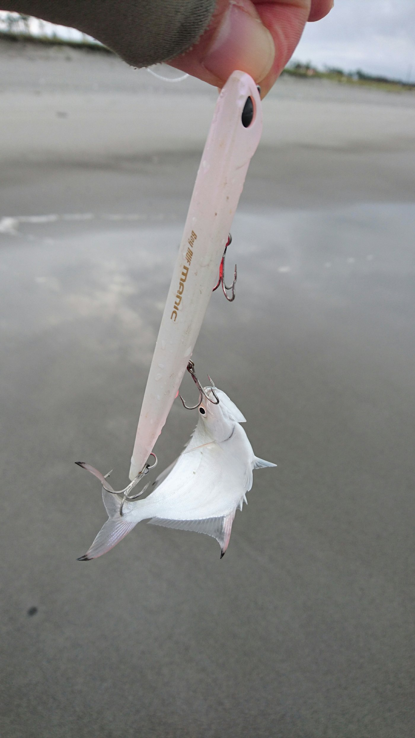 masa_KINGさんの投稿画像,写っている魚はギンガメアジ