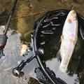 釣り之さんのニジマスの釣果写真